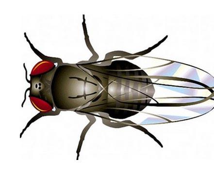 Độc lạ: Một con ruồi bé tý đã làm đổ hơn 50 vạn mảnh domino